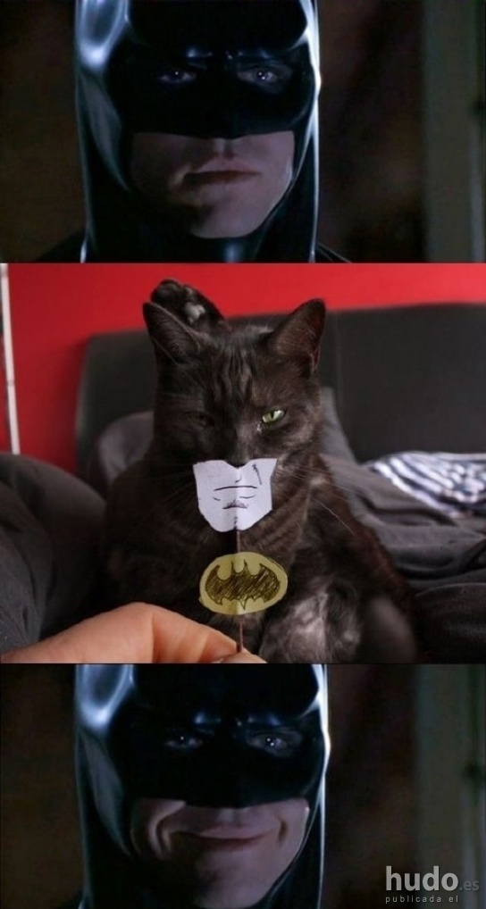 Como convertir tu gato en verdadero Batman...